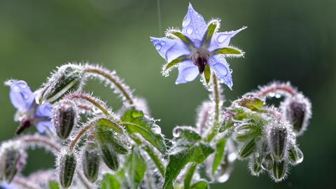Natürliches Anti-Aging: Das Öl dieser Pflanze sorgt für glatte und geschmeidige Haut