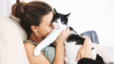 6 Tipps, wie du dich mit einer Katze anfreundest