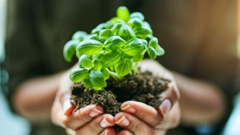 Umweltbewusster Garten: So einfach geht's mit diesen Tipps