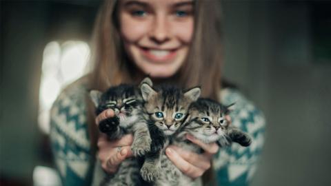 Diese Sternzeichen lieben Katzen über alles