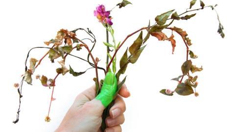 Keinen grünen Daumen: So klappt es trotzdem mit deiner Zimmerpflanze