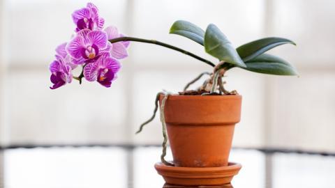 Mit diesem einfachen Trick hältst du deine Orchideen länger schön