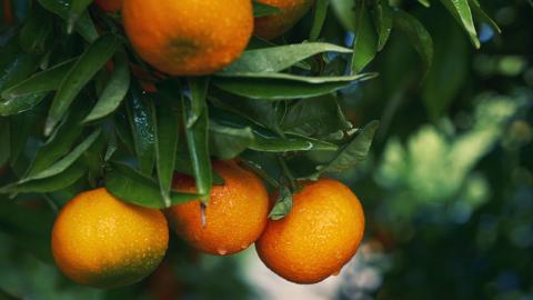Sind Mandarinen gesundheitsschädlich? Ein bestimmter Stoff kann Langzeitschäden im Gehirn auslösen