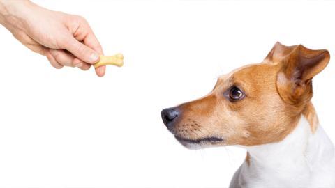 Forscher offenbart: Hunde wissen ganz genau, wenn ein Mensch böse ist