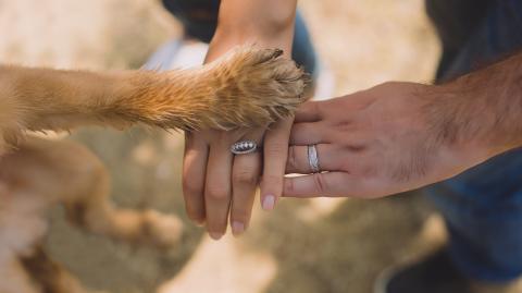 Freund für's Leben: Wie gewinnt man das Herz seines Hundes?