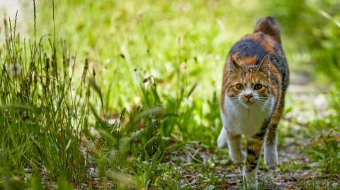 4 tierfreundliche Tipps: So vertreibst du Katzen effektiv aus deinem Garten