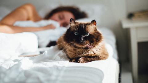 Kuscheltiger zu Hause? Deshalb sollte deine Katze jetzt nicht mit dir im Bett schlafen