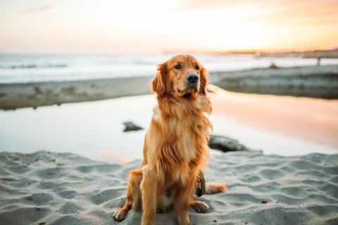 So schützt ihr euren Hund vor einem Sonnenbrand
