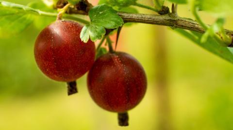 Flacher Bauch: Mit dieser Frucht nehmt ihr ganz leicht ab
