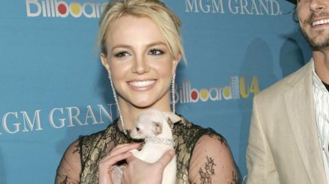 Haushälterin beschuldigt Britney Spears: Ihre Hunde sollen ausgetrocknet gewesen sein!