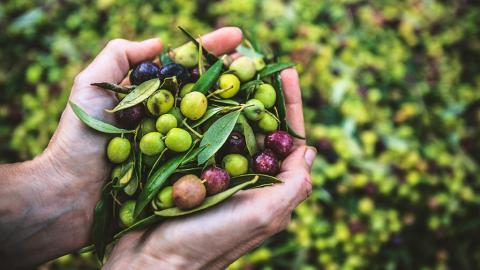 Olivenöl-Produktion kostet Millionen geschützter Tiere das Leben