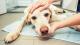 Beunruhigende Hundekrankheit aus Norwegen breitet sich in Deutschland aus