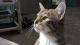 Verrückte Aktion: Gerissener Kater befreit Katzen im Tierheim