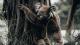 Junge bastelt niedliche Koalas und sammelt beeindruckende Geldspende für Australien