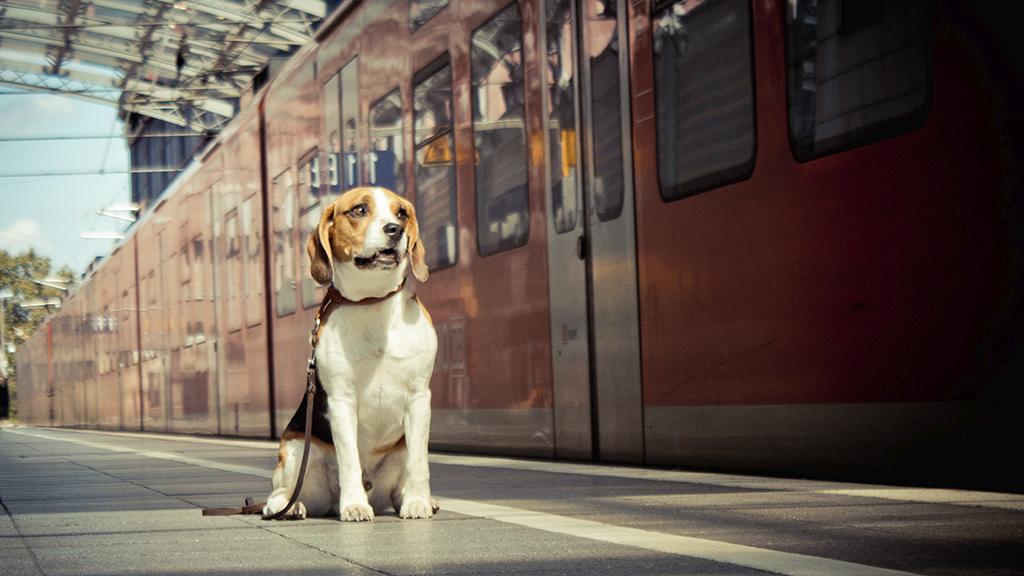 Als sich der Zug nähert, trifft der Hund eine unglaubliche Entscheidung