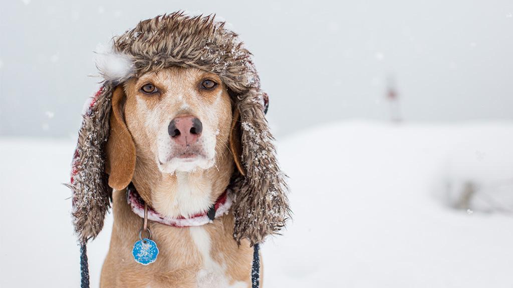 So schützt du deinen Hund im Winter am besten vor Kälte