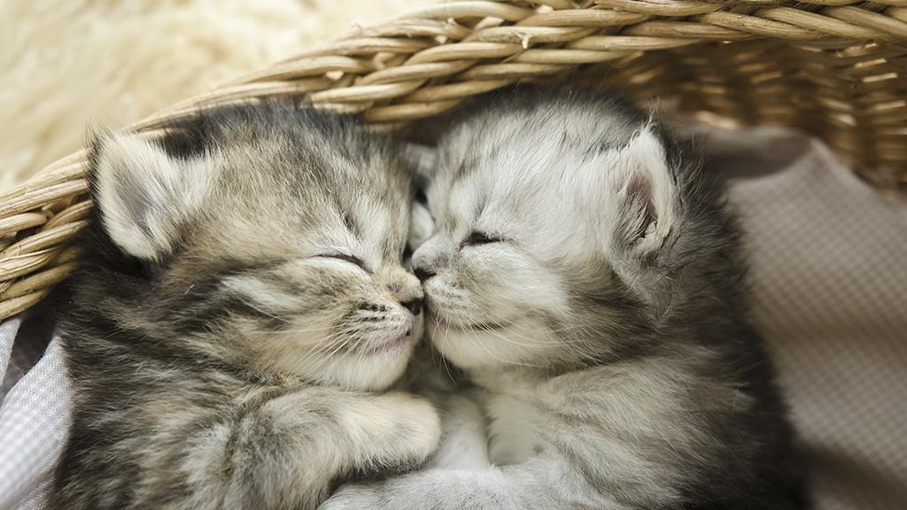 Sie findet verlassene Kitten und will Hilfe suchen: Als sie über dir Schulter blickt, traut sie ihren Augen kaum
