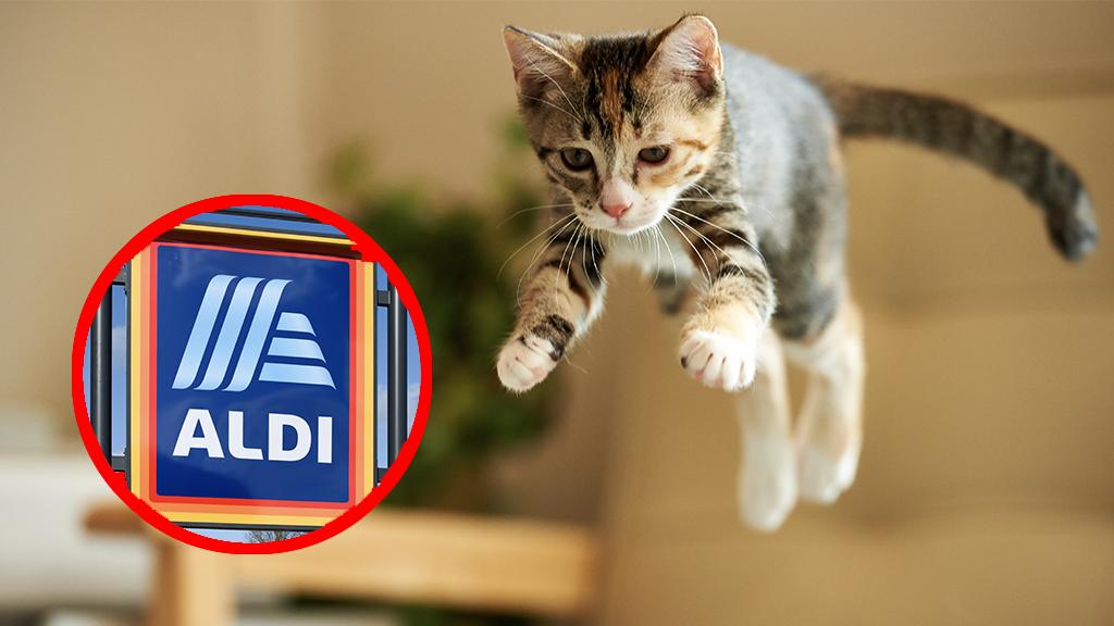 Katzen sind verrückt nach diesem Gratis-Spielzeug von Aldi: Jetzt warnt Tierarzt vor gesundheitlichen Folgen