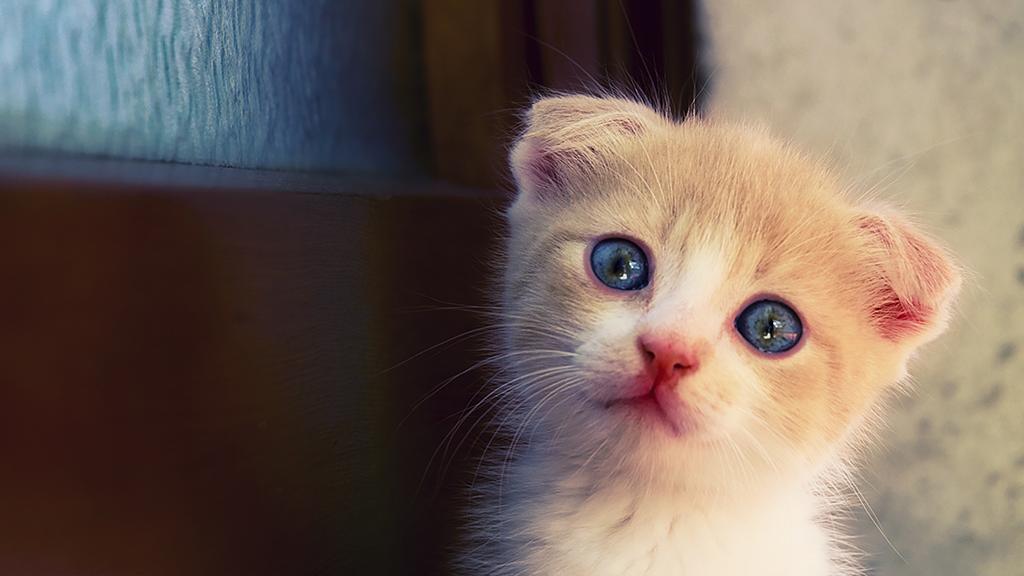 Katze: Täglich habe ich das gemacht und ihr damit unbewusst das Herz …