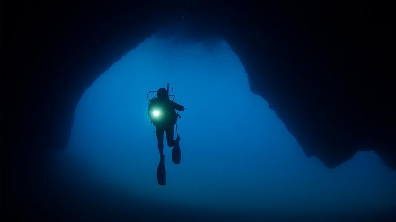 Tierische Unterwasserbegegnung: Britischer Taucher hält bewegende Bil…