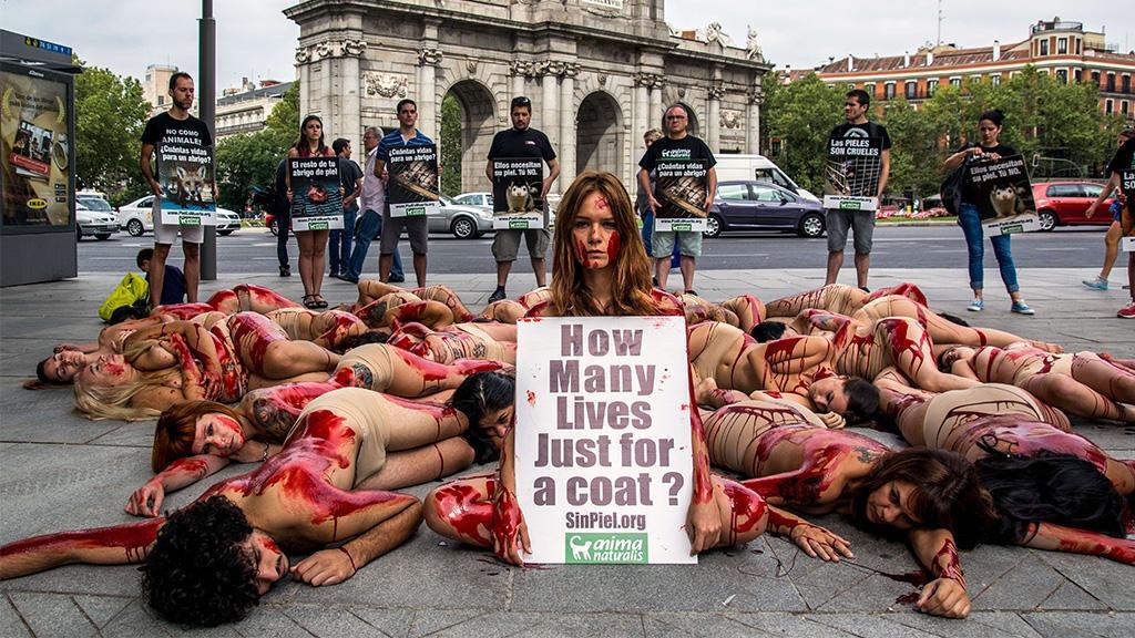 Tierschutz: Aus falschem Grund beendet Kalifornien das grausame Töten von Wildtieren für ihren Pelz