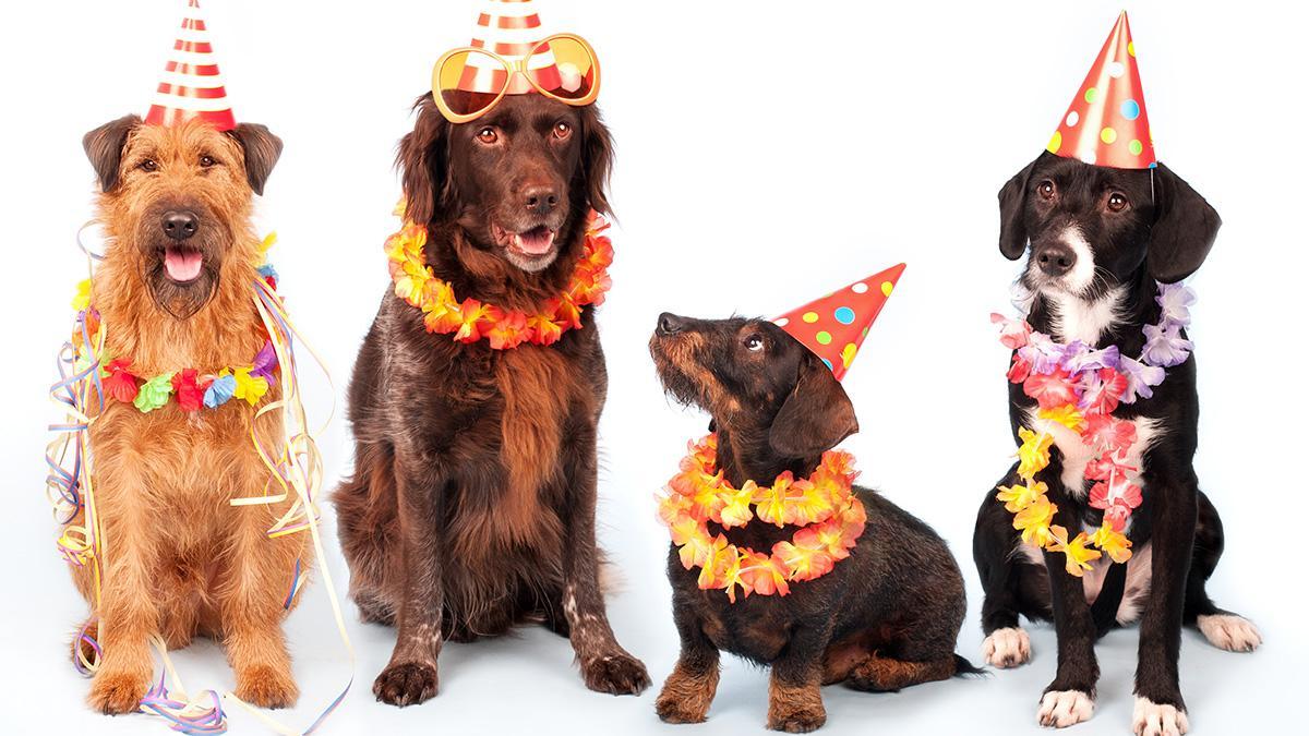 Tierischer Stress: Weshalb Tiere beim Karneval nichts zu suchen haben