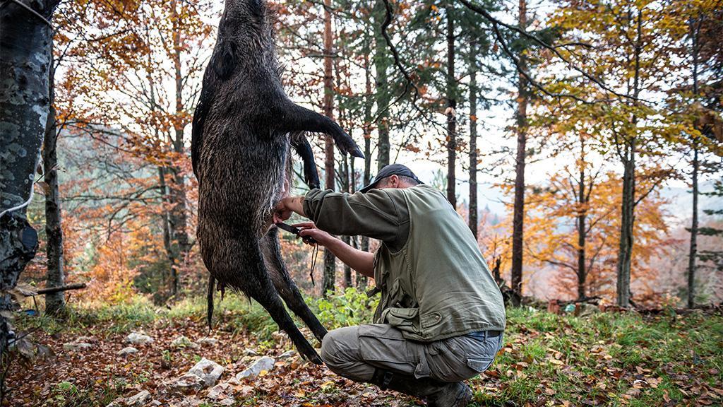 Jäger erlegt Wildschwein: Als er es aufschneidet, traut er seinen Augen nicht